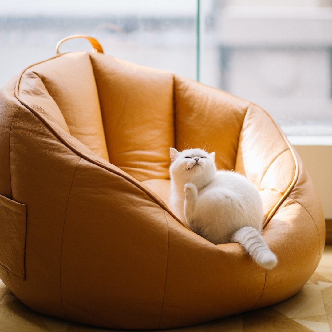 witte kat in een fauteuil
