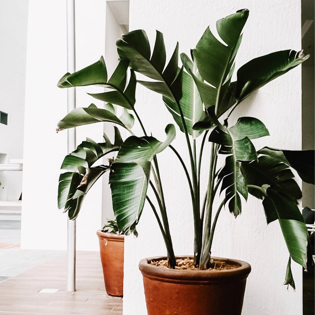 grote groene plant in zonlicht